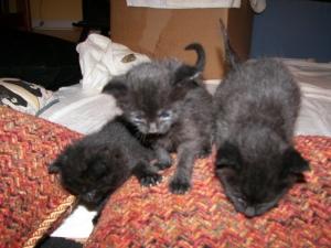 3 Baby Kittens