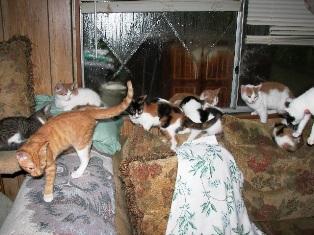 fogle kittens