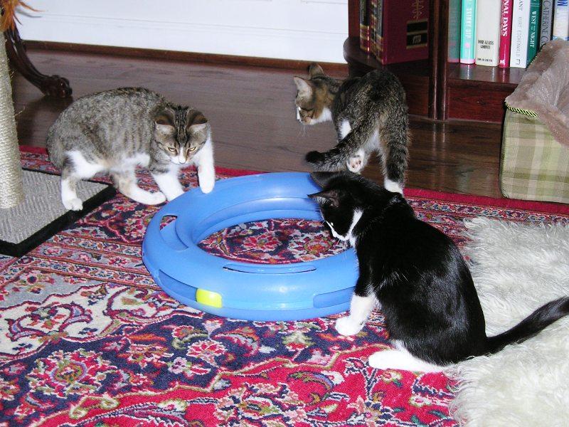 Cat Rescue Waxhaw Nc